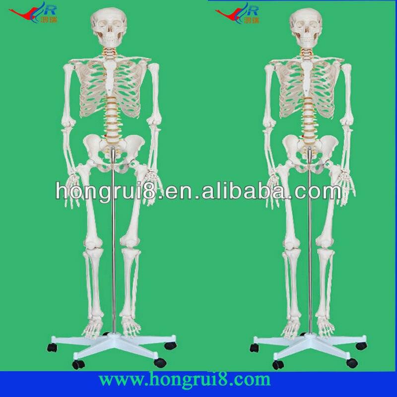 Squelette humain de haute qualité grandeur nature modèle 180 cm de hauteur