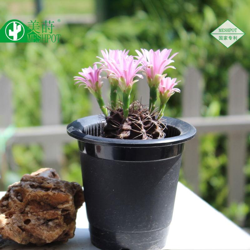 Beautiful Pot De Fleur Jardin #9: MESHPOT Jardin Pots De Fleurs Planteur Ensemble Pour Bonsaï Succulent,  Améliorer Racine Quantité Et Activité, Finition Noire Et .