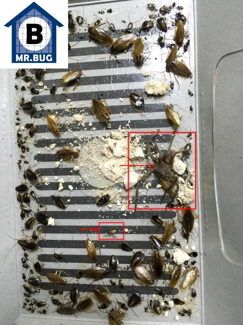2018 New ECO Mr Bug cockroach control capture trapper, Home cockroaches trap roaches trapper, pest kill bait trap non-toxic! Щипцы