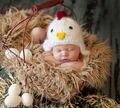 2016 pollo Lindo sombrero recién nacido foto atrezzo 0-3 meses bebé bebé del ganchillo del casquillo del sombrero traje fotografía atrezzo recem nascido foto