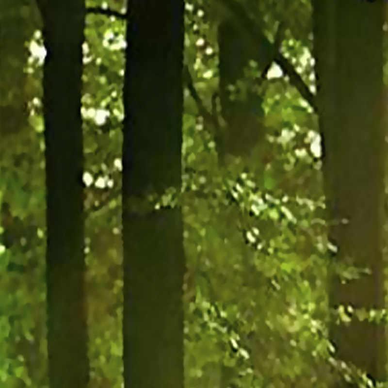 مخصص جدارية خلفية الحديثة 3D الابتدائية الغابات الطبيعة مشهد طلاء جدران غرفة المعيشة أريكة خلفية خلفيات للجدران 3 D