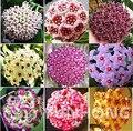 24 Color Available Rare Ball Orchid Flower bonsai Perennial Garden Plant Hoya Carnosa Flower plant 100PCS Free Shipping