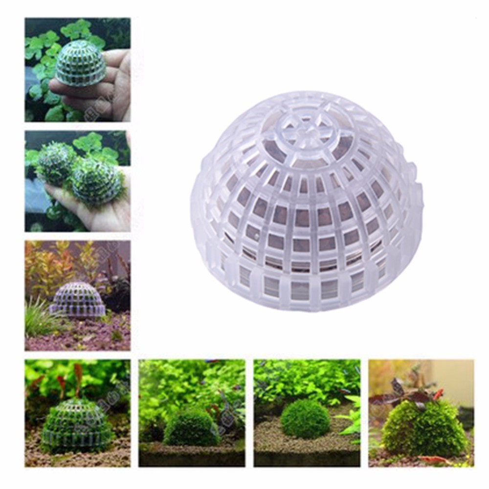 Aliexpress.com : Buy Hight Quality Aquarium Fish DIY Live ...