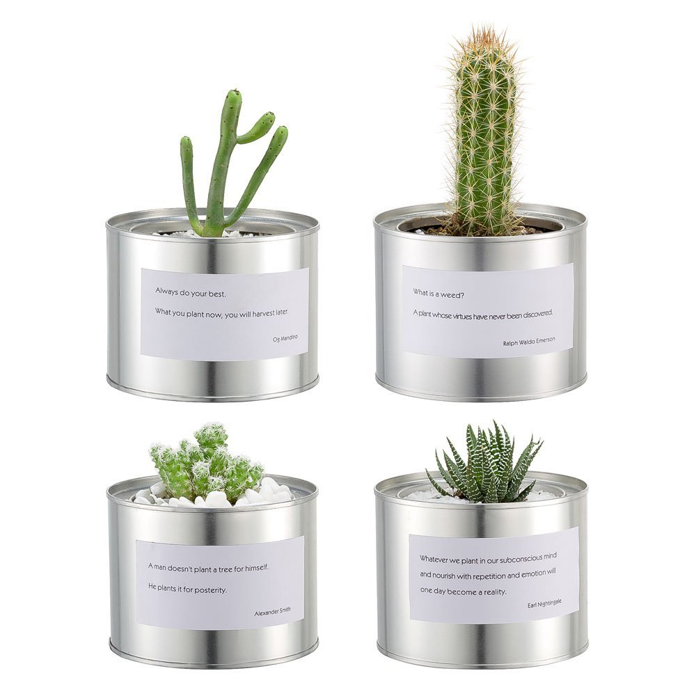 mkono metal cactus planters round cacti pots small plants succulent containers with proverbs for indoor office