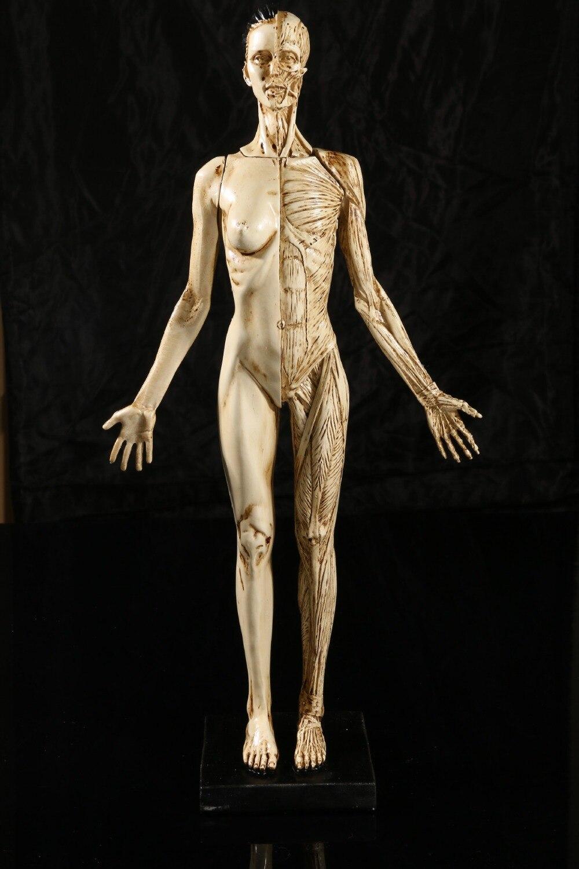 43 CM Harz weiblichen menschlichen anatomie schädel modell für Kunst ...