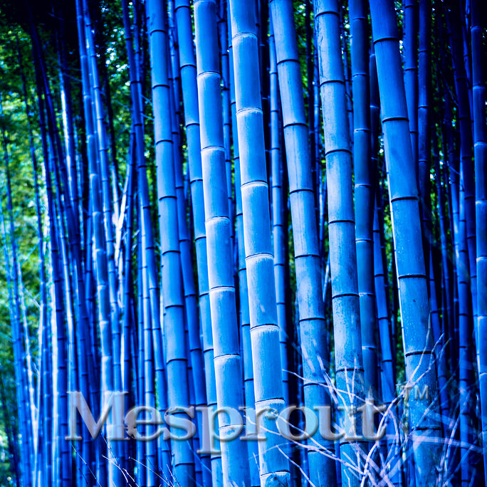 online blue bamboo