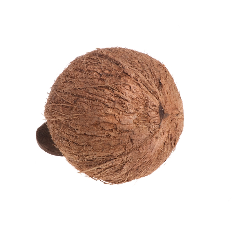 Давайте птицу попугай гнездо натурального кокосового В виде ракушки висит цепи клетке Игрушечные лошадки Свинг дом Finch