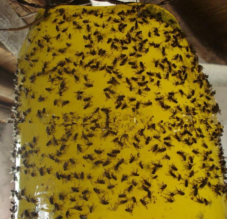 youtube bug bed gallon harris watch bugs killer spray