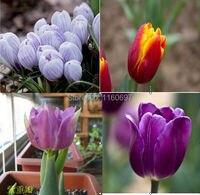 Home &garden  4color flower bulbs tulip bulbs sementes de flores case e jardim garden bonsai tree plants seed with gift