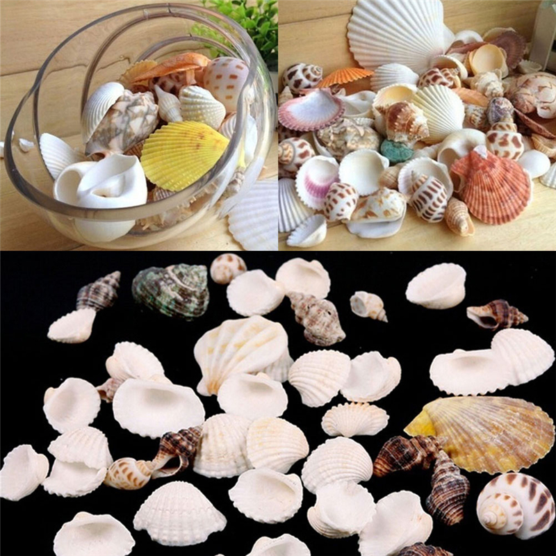 Sea Shells Mixed Beach Seashells Various Sizes up to 2 Shells 50 Seashells Bag of Approx