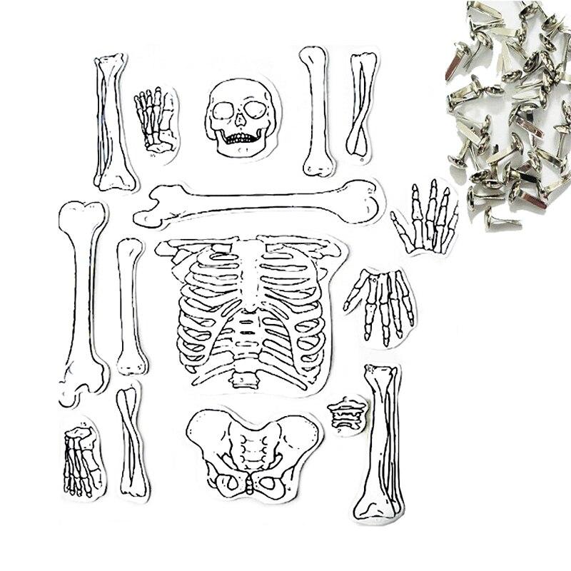 Tienda Online 1 Unidades hechos a mano esqueleto estructura ciencia ...