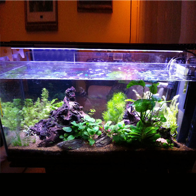 Emejing Aquarium Led Verlichting Forum Images - Huis & Interieur ...