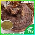 Linteus phellinus extrato de alta qualidade com melhor preço a granel com preço de atacado 700 g/lote frete grátis