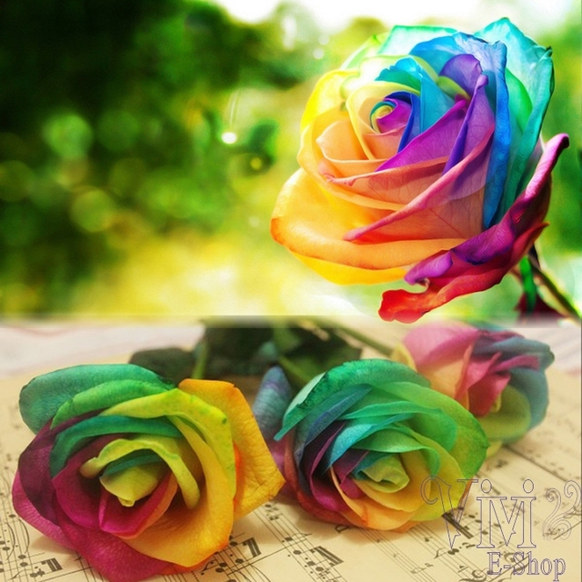500Pcs/Pack Flower Seeds China Rare Rainbow Rose Seeds Beautiful ...