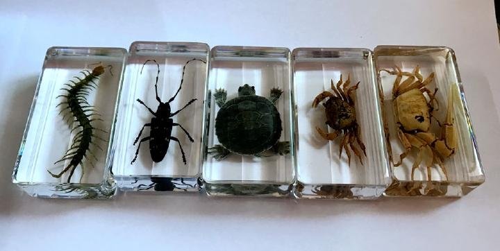 FREE SHIPPING 5 Pcs Vintage Yqtdmy Scolopendra Bug Crab Tortoise Design Lucid Specimen