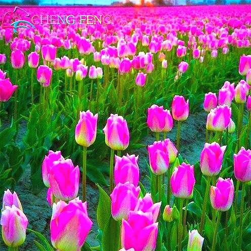 Самые красивые цветы купить семена что можно сшить в подарок мужчине