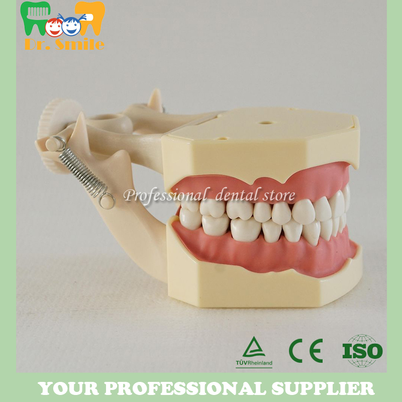 Good quality Dental Soft Gum Teeth Model with tougneTypodont w/ 32 Removable Teeth NISSIN 200 Compatible free shipping good quality dental soft gum teeth model with tougnetypodont w 32 removable teeth nissin 200 compatible