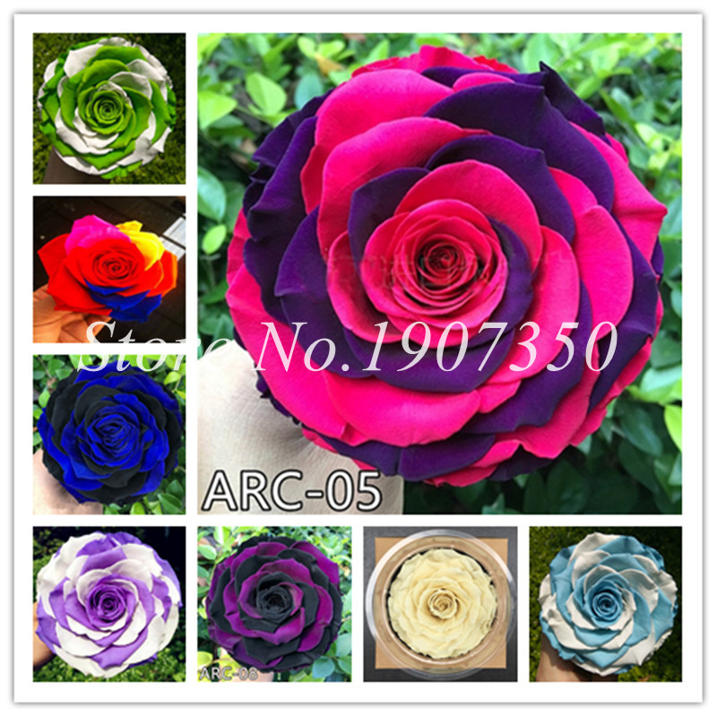 Bonsai Hot Selling High Quality Bonsai Climbing Rose Flower Mix Colors Beautiful Rose Bonsai Plants For Home Garden 100 Pcs/bag To Have Both The Quality Of Tenacity And Hardness Home & Garden