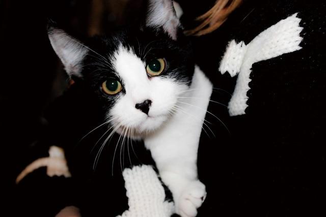 Leuke Posters Woonkamer : Kitten mooie leuke animal kleine kat zwart wit monochroom kb