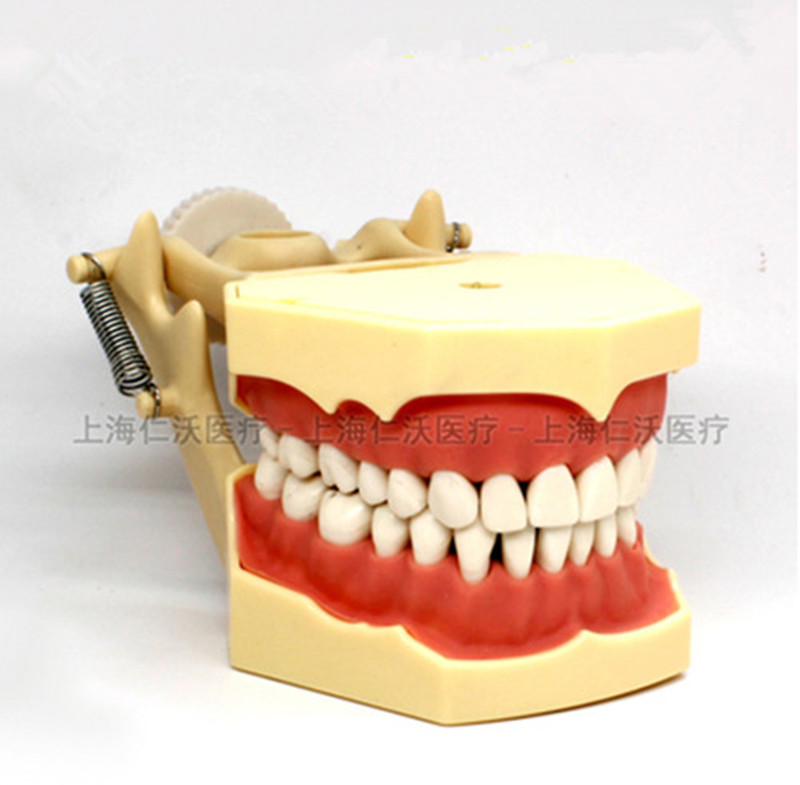 Various-Dental-Teeth-Models-Are-Used-For-Teaching-And-Hospital-Dentist-Material.jpg_640x640 (2)_