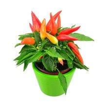 200pcs Hot Pepper Capsicum annuum Ornamental Chili Seedss, plants vegetables food Mini