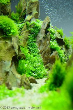 how to grow aquarium plants from seeds