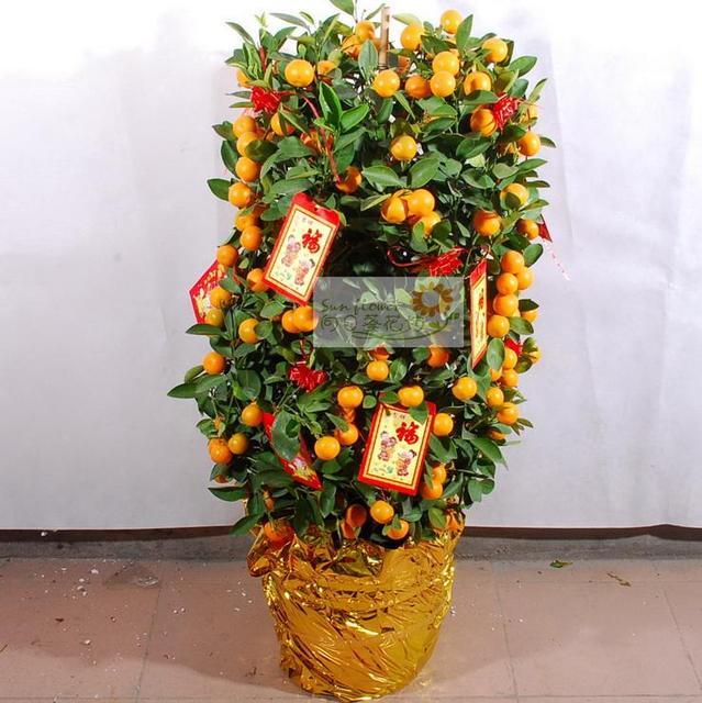 Orange Tree Kumquat Tree Kumquat Tree In Orange Tree Flower Bonsai