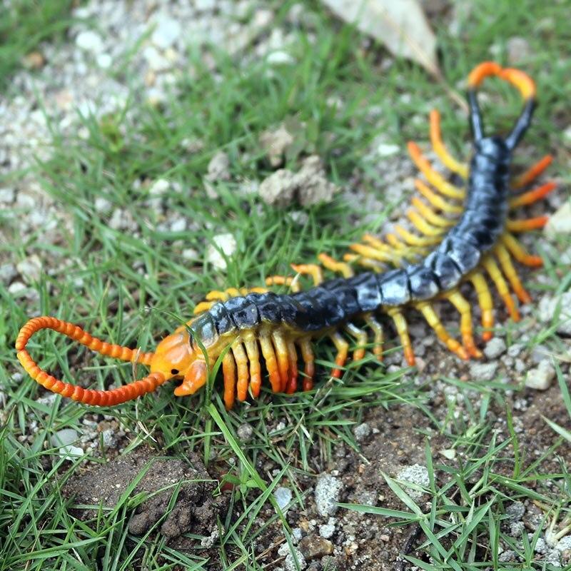 PL127-1130蜈蚣