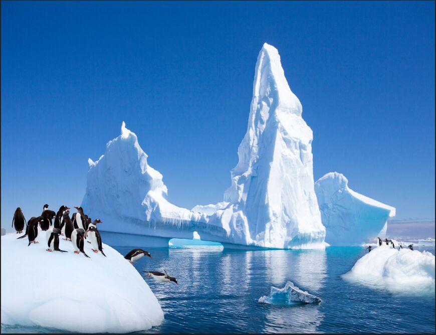 Buy Large 3D Background Wallpaper Cute Arctic Penguin Mural Wallpaper Bedroom