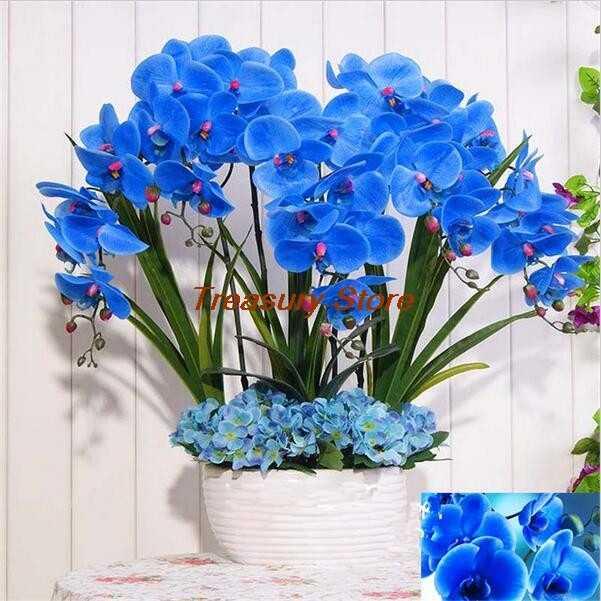 100 шт. импортный синий Orhid фаленопсис открытый горшок для дерева Бонсай балкон Планта для дома сад посадки легко выращивать