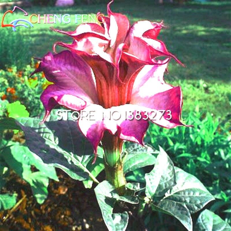 Юбка растение