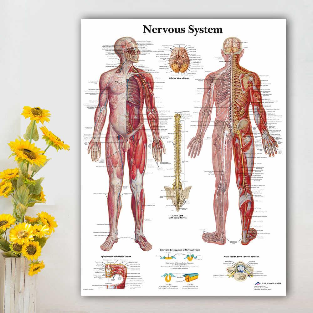 Рисунок с картой, рисунок с картой, настенные картины для медицинского образования, для доктора, офиса, для домашнего декора