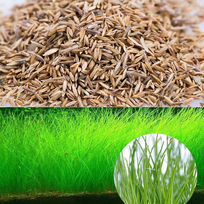 Water Grass Seed Aquarium Aquatic Plants Seeds Easy Planting Fish Tank Landscape Ornament Lawn Decor1