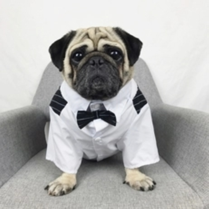 Buy dog suits for weddings and get free shipping on AliExpress.com