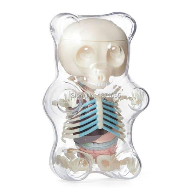 Tienda Online Ciencia Juguetes 4 dmaster anatomía modelo perspectiva ...