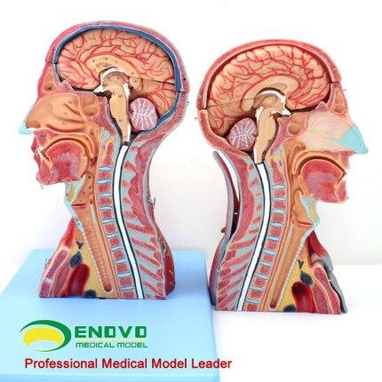 Akupunktur und moxibustion neurophysiologie neurochirurgie ...