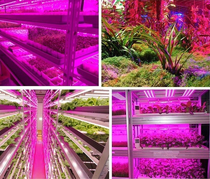 L'usine de LED élèvent des lumières 5M SMD 5050 DC12V LED Flexible élèvent la lumière de bande pour le légume de plante hydroponique de serre 6