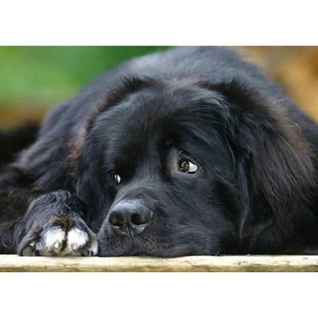 Hitam Anjing Yang Sedih Lukisan Berlian 3d Gambar Kit Cross Stitch