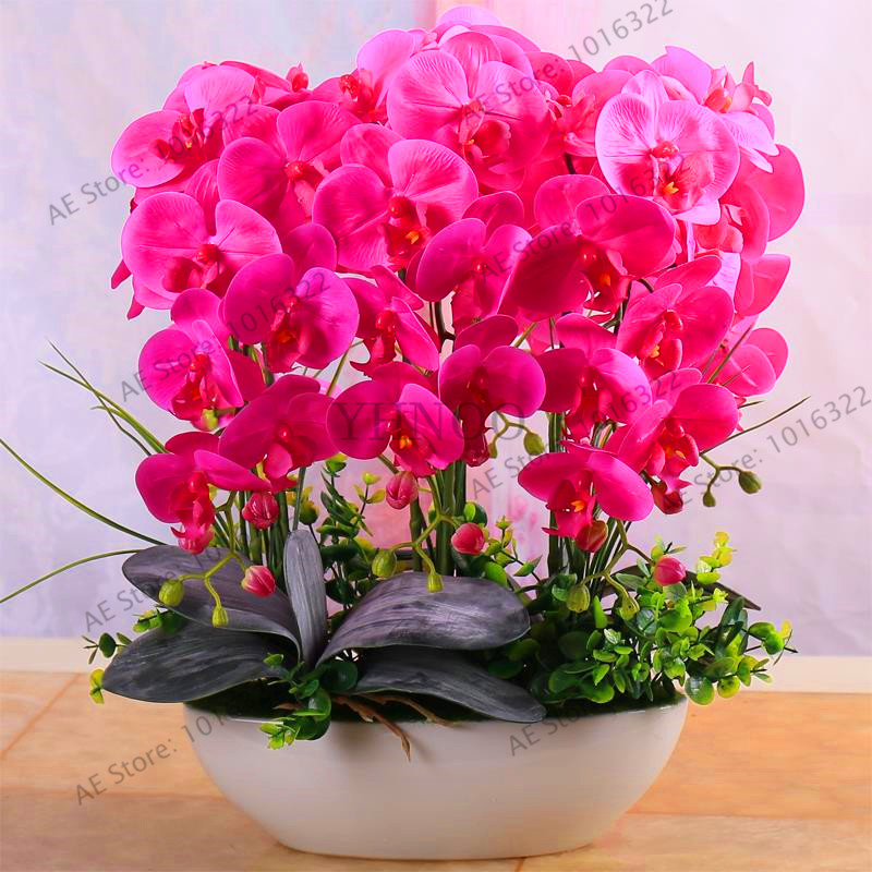 New Seeds 2018!Phalaenopsis suite living room interior decoration flowers potted 20 seeds,#A961TL