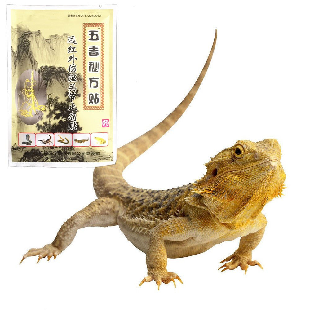 Chinese Medicine Lizard venom Pain Relief Essential oil Rapid Analgesic effect From Rheumatic Rheumatoid Arthritis Patches image