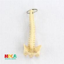 Человеческий позвоночник Ключ Пряжка орнамент подарок подвеска Ключ Пряжка человек. Орган, анатомия медицинская обучающая игрушка YSK010