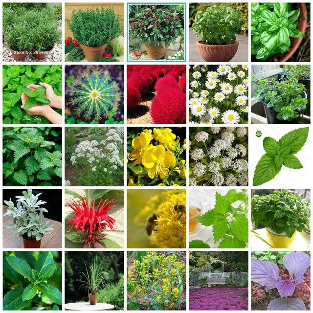 25 tipos de hierbas semillas diy decoraci n belleza casa for Hongos en las plantas de jardin