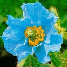 Rare Persian Blue poppy Papaver Somniferum DIY Home Garden Flower Seeds Easy to Grow 200 PCS poppy seeds
