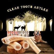Natural clean tooth antlers bite about 2 months dog molar stick dog snacks bone wholesale-in Dog Toys from Home & Garden