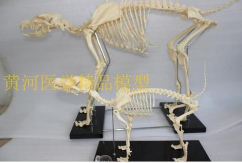 animal skeleton model dog skeleton model educational model рубашка мужская greg horman цвет синий белый 2 171 20 1393 размер 39 46