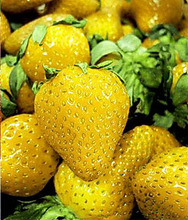 Promotion! 300 PCS Yellow Strawberry Fruit Bonsai Patio Home Garden Pot Plant Plantas Edible Nutritious