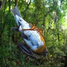 3×15 m) vogelnetz china mesh15mm planta pomar frutas passaro morcego erfasst erfasst nevoa frete nylon net für Vogelabwehr