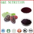 1000g/lot Mulberry Fruit Extract mulberry leaf extract mulberry powder free shipping