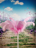 Wholesale perfect  100pcs  high quality natural ostrich feathers 18-20inch/45-50cm  Decorative diy pink