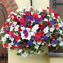 bonsai flower 100 pcs/bag garden Petunia plants, plant for home planting